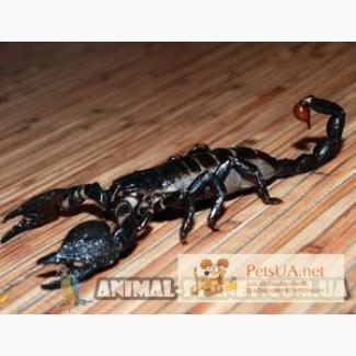 В продаже скорпионы и пауки