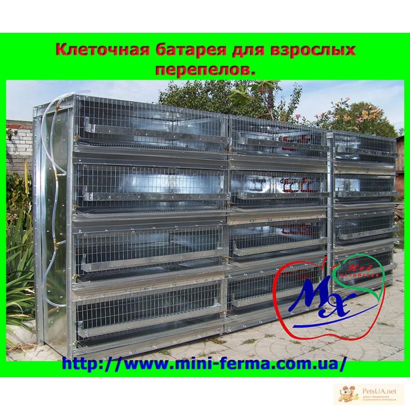 Фото 3. Клетки для содержания перепелов