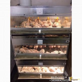 Брудер для цыплят, бройлеров, перепелов ВИДЕО