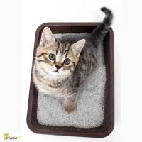 Кошачий наполнитель цеолит