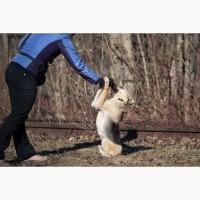 Отдам в хорошие руки молодую собаку Литу