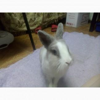 Отдам бесплатно декоративного кролика