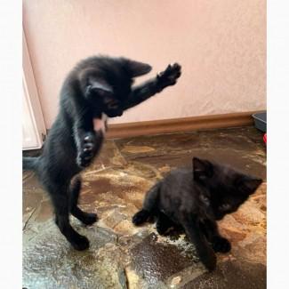 Отдам в добрые руки котят