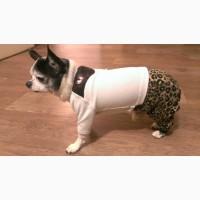 Одежда для собачек. Легкий комбинезончик