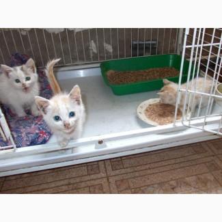 Очаровательные крошки-котята, девочки в добрые руки