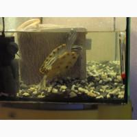 Продам полный комплект для рептилии. Идеальный дом для черепахи