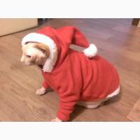 Новогодний костюм для собак или сфинксов -свитер Санта