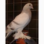 Аксессуары для голубей. Пластиковые разборные сидушки для голубей