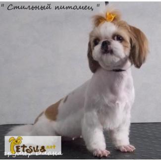 Красивые и модные стрижки собак. Краматорск