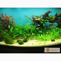 Аквариум. Обслуживание аквариумов, уход за аквариумом, рыбки, чистка аквариумов