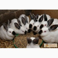 Комбікорм для кролів (молодняк та дорослі) ТМ Щедра нива та ТопКорм