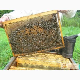 Продаєм бджолопакети!Черкащина!