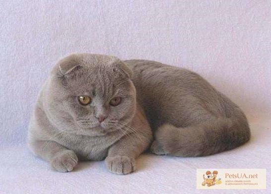 Котята севастополь