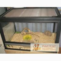 Продам террариум \\ акватеррариум стекло из разных материалов
