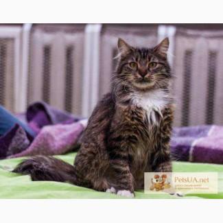 Ласковая сибирская кошка в хорошие руки!