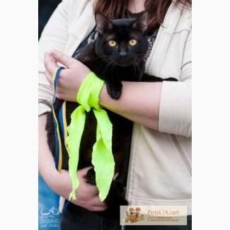 Котик Черныш ищет семью.