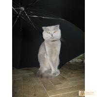 Шотландский мачо приглашает в гости