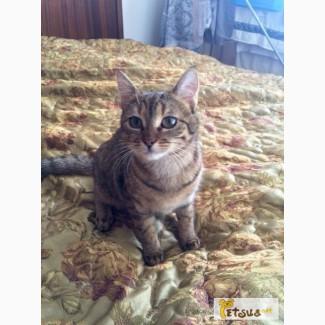 Продаю кошку египетскую мау (7 месяцев)