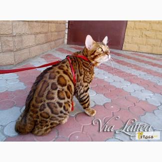Питомник бенгальских кошек Via Lattea