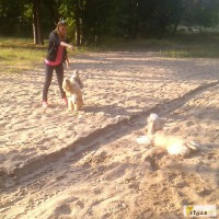 Передержка, выгул собак