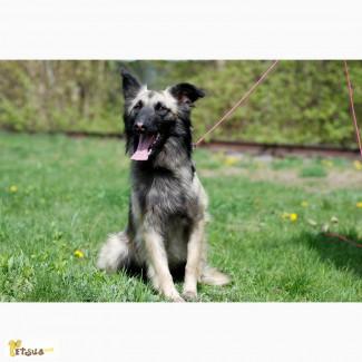 Нельма, собака с окрасом потрясающей красоты