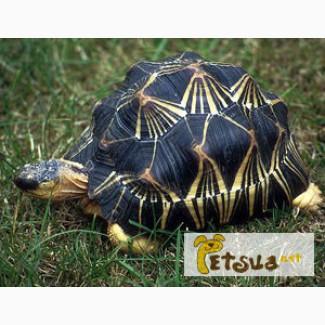 Продаём черепах разных видов от питомника «Планета животных»
