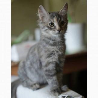 Масенька и Мурочка, чудесные домашние котята в добрые руки