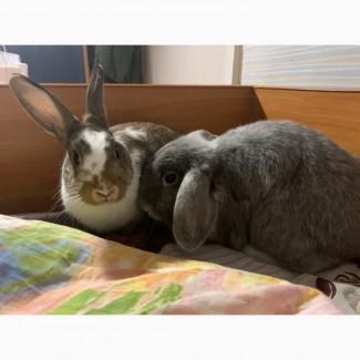 Отдам кроликов в семью