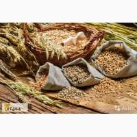 Продажа зерна и комбикормов