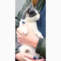 Отдам бесплатно 3-е котят 2, 5 месяца, красивые, ласковые. Днепр