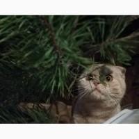 Котята вислоухие плюшевые. Хрюшечка под Ёлочку. Видео