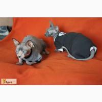 Пошив бодиков для котов