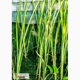 Продаём водные растения, построим искусственный пруд