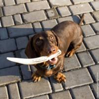Рога оленя лакомство для собак