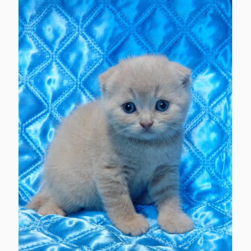 Фото 2/8. Котята вислоухие плюшевые. Мини-ушки. ВИДЕО