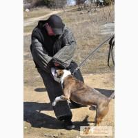 Профессиональная дрессировка собак в Севастополе и окрестностях.