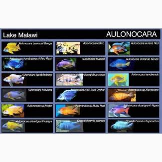 Предлагаю множество разных аквариумных рыбок, коряг, корма