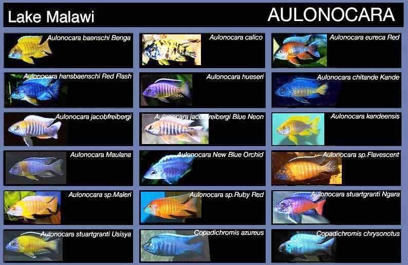 Фото 1/1. Предлагаю множество разных аквариумных рыбок, коряг, корма