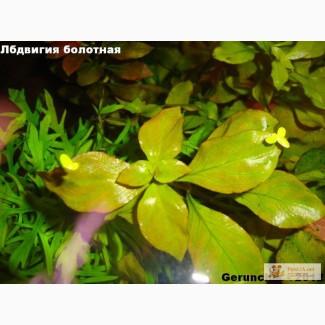 Набор живых растений для аквариума.