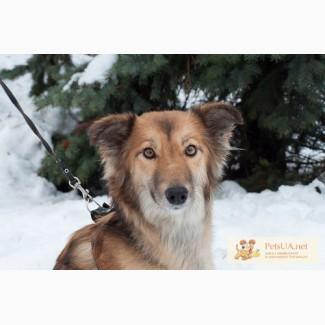 Ищет дом молодая собачка Линда