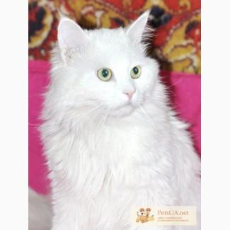 Ангорский котик белый 1, 5г.