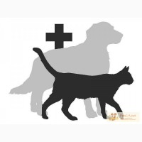 Усыпление кошек(собак).Кремация животных.