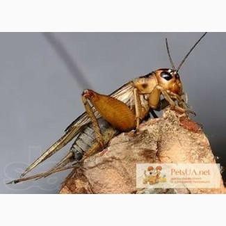 Продаются кормовые насекомые, корма для рептилий