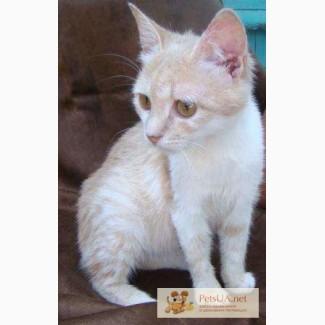 Рыже-персиковый котенок - лучик радости, веселья и озорства
