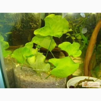 Распродажа аквариумных растений.
