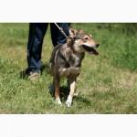 Ильда, небольшая стерилизованная собачка