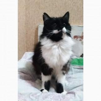 Кошка. Метис ангоры
