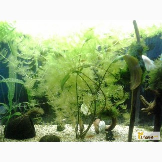 Набір акваріумних рослин
