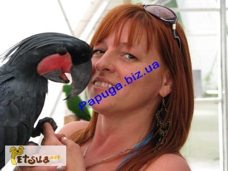 Фото 1/1. Элитные попугаи из питомника«Г.Р.А.Ф.»