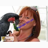 Элитные попугаи из питомника«Г.Р.А.Ф.»
